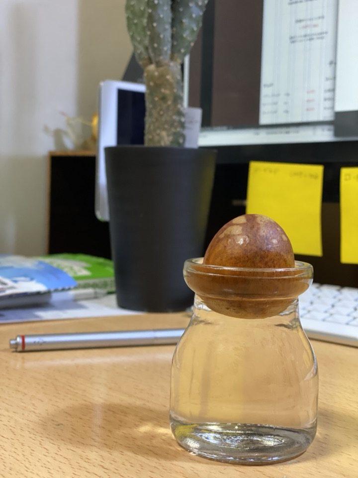 小瓶に収まったアボガドの種